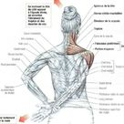 Deltoid, trapezius and neck stretching