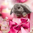 Pretty in Pink Easter Bunny