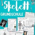 Skelett Unterrichtsreihe   Arbeitsblätter, Versuche, Bastelanleitungen, Forscherfragen