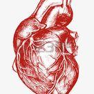 Menschliches Herz-Zeichnung Linienarbeit