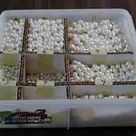 Edible Pearls