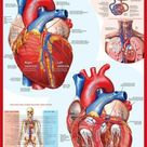 'The Heart' Poster  | AllPosters.com