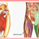 Groin rehab and prehab for groin pain and groin pull.