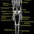 Das Knochengerüst des Menschen Skelett   Übersicht   Medienwerkstatt Wissen © 2006 2021 Medienwerkstatt
