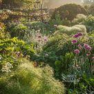 Through The Garden, IGPOTY beautiful gardens winner, Great Dixter Alliums and Fennel Photographic Pr