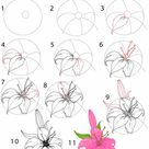 How to Draw a Lily (Step by Step Pictures)