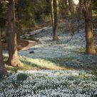 Garden Visit Snowdrop Season at Painswick Rococo Garden   Gardenista