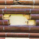 Log Of