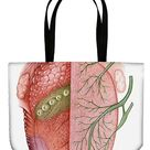 Shopping Bag. Cross section illustration of human tongue, showing taste sensation region on right, and cranial nerve pathways on left