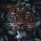 Cougar Wallpaper - IPhone Wallpapers