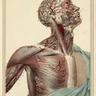 10 inch Photo. Head and chest arteries, 1825 artwork