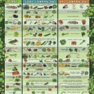 Beginners Companion Planting Resources for Easy Gardening