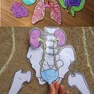 Life Sized Human Anatomy Lesson including Skeletal and Digestive Systems