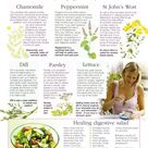 Herbs for digestive upsets