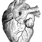 Human Heart by Granger