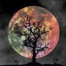 Free Image on Pixabay - Full Moon, Silhouette, Tree, Night