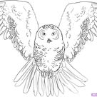 How To Draw An Owl, Step by Step, Drawing Guide, by Dawn