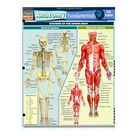 Anatomy Fundamentals: Life Science, Laminated Guide