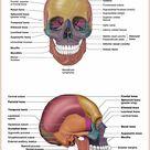 Skeletal System Anatomy and Physiology - Nurseslabs