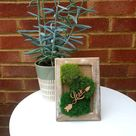 Bun Moss with Love Sign in Mango Wooden Frame