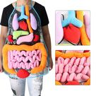 Anatomy Apron - Human Body Organs Awareness Educational Insights Toys for Children