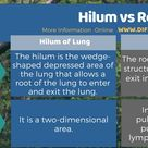 Difference Between Hilum and Root of Lung   Compare the Difference Between Similar Terms