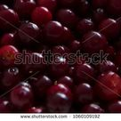 Natural background from juicy cowberries. Beauty wallpaper with berries  #berries #texture #background #summer #design #photo #nature #backdrop #wallpaper #red #lingonberry #cowberry #tundra #north #trade #jam #fresh #mors #food #benefit #vitamins #recipe #kitchen #berry #agriculture #autumn #vegan