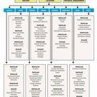 Dermatology algorithm