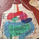 Self-made digestive system apron