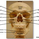 Flickriver: Most interesting photos tagged with foramen