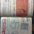 Muscular system-structure of a fiber