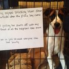 Dog Shaming Photos