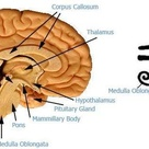 DiscoverYourAura: Pineal Gland
