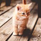 Little Kitty