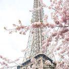 Paris Photography April in Paris Girls Room Art Pink Paris   Etsy