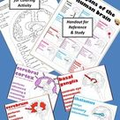 Psychology or Anatomy - Fun Activity - Coloring the Regions of the Brain