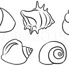 How To Draw Shells, Step by Step, Drawing Guide, by Dawn