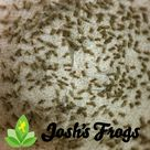 Cricket Care Sheet - Josh's Frogs How-To Guides