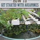 Aquaponics Diy