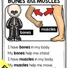 ALL ABOUT My Body and 5 Senses kindergarten lessons and activities