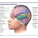 The Brain - National CPR Association