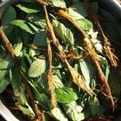 This Is How Ayahuasca Affects the Brain