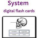 Skeletal System Boom Cards