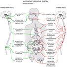 Experiment: Activate your Sympathetic Nervous System
