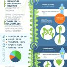 The Spinal Cord Injury Levels [Infographic]