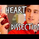 What's inside a heart Heart Dissection   We The Curious