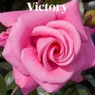 Flowers Victory