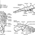 7 Keys to Your Foot Health   Exercises For Injuries