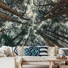 Muralo Fototapete Wald 254 (B) x 184 (H) cm Vlies Tapete Wandtapeten Bäume Optik Himmel Wohnzimmer Schlafzimmer moderne Wandbilder XXL Landschaft Panorama Wand Dekoration