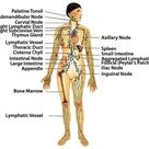 Support the Lymphatic System - American Holistic Health Association